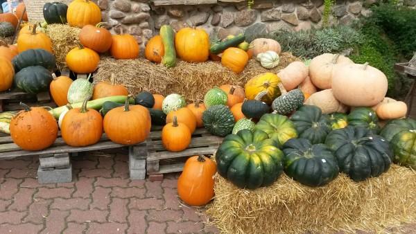 pumpkin-819350_1280